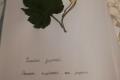 galeria_zielników_2020_36